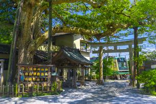 御霊神社の鳥居と江ノ島電鉄の列車の写真素材 [FYI04504154]