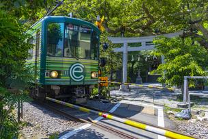 御霊神社の鳥居と江ノ島電鉄の列車の写真素材 [FYI04504155]