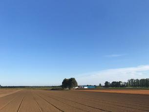 広大な初秋の北海道畑と空の写真素材 [FYI04504219]