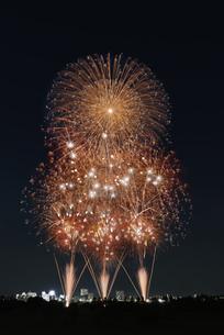 とりで利根川大花火の写真素材 [FYI04504321]
