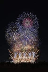 とりで利根川大花火の写真素材 [FYI04504322]