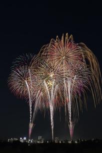 とりで利根川大花火の写真素材 [FYI04504328]