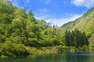 青空と新緑が美しい神岳ダムの風景の写真素材 [FYI04504510]