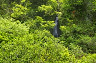 新緑の山肌に流れる無名の小さな滝の写真素材 [FYI04504512]