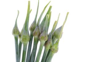 ニンニクの芽の写真素材 [FYI04504850]
