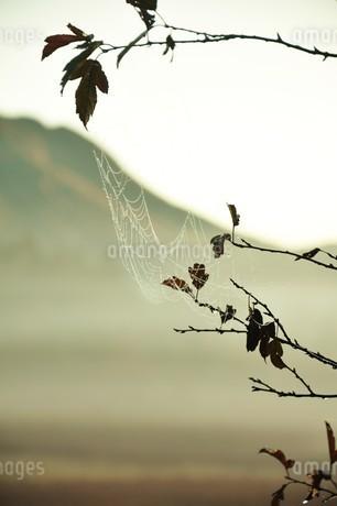 雨、蜘蛛、雫の写真素材 [FYI04504994]