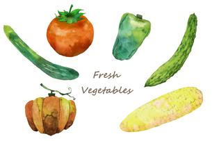 夏野菜水彩画のイラスト素材 [FYI04505057]