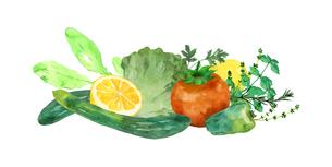 野菜とハーブ水彩画のイラスト素材 [FYI04505058]