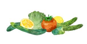 野菜水彩画のイラスト素材 [FYI04505062]