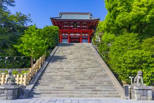 鶴岡八幡宮の本宮の写真素材 [FYI04505129]