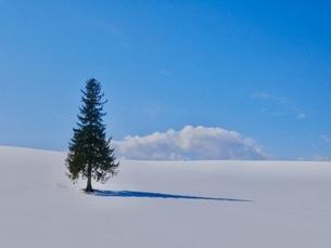 クリスマスツリーの木の写真素材 [FYI04505203]