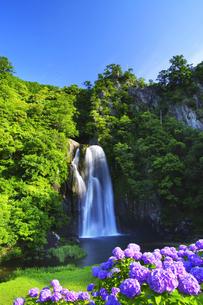 飛雪の滝と紫陽花の花の写真素材 [FYI04505280]