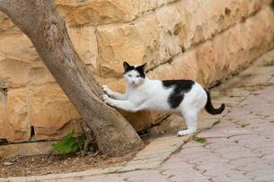 マルタ共和国、木の幹で爪とぎをする猫の写真素材 [FYI04505398]