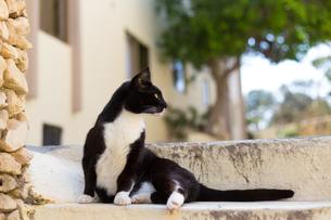 マルタ共和国、石段の上の黒白猫の写真素材 [FYI04505412]