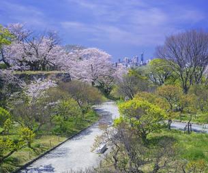 福岡県 桜 福岡城跡 (舞鶴公園)の写真素材 [FYI04505417]