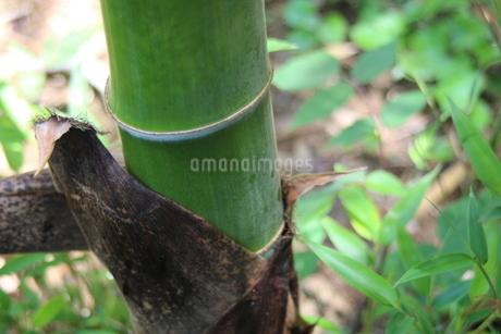 緑の写真素材 [FYI04506247]