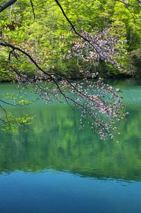 蔵王ドッコ沼の写真素材 [FYI04506716]