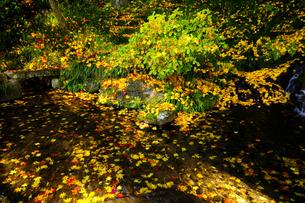 池に浮かぶ紅葉の写真素材 [FYI04507107]