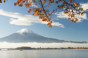 富士山と桜の木の紅葉の写真素材 [FYI04507167]
