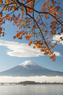 富士山と桜の木の紅葉の写真素材 [FYI04507168]