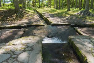 木漏れ日の三分一湧水の写真素材 [FYI04507229]