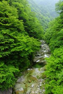 新緑の尾白川渓谷の写真素材 [FYI04507258]