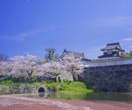 福岡県 桜 福岡城跡 (舞鶴公園)の写真素材 [FYI04507267]
