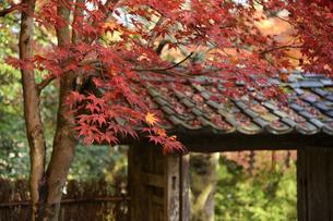 若狭神宮寺の写真素材 [FYI04507709]