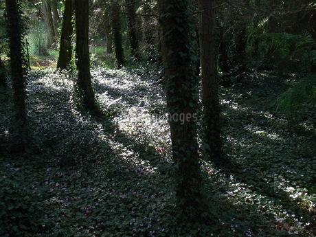 木の写真素材 [FYI04508020]