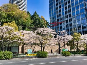 東京港区 神谷町界隈の桜の写真素材 [FYI04508291]
