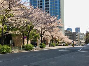 東京港区 神谷町界隈の桜の写真素材 [FYI04508301]