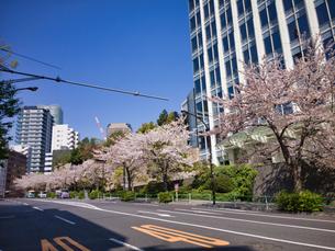 東京港区 神谷町界隈の桜の写真素材 [FYI04508305]