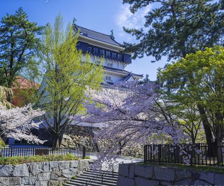 福岡県 桜 小倉城 (勝山公園)の写真素材 [FYI04508727]