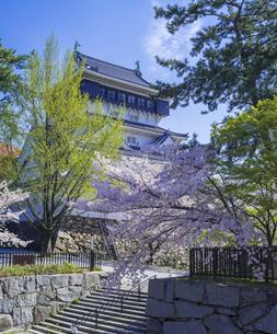 福岡県 桜 小倉城 (勝山公園)の写真素材 [FYI04508729]