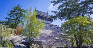 福岡県 桜 小倉城 (勝山公園)の写真素材 [FYI04508732]