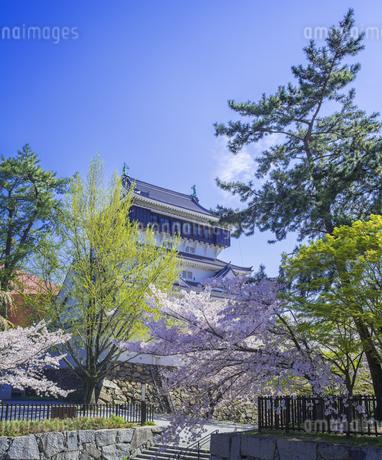 福岡県 桜 小倉城 (勝山公園)の写真素材 [FYI04508734]