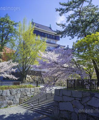福岡県 桜 小倉城 (勝山公園)の写真素材 [FYI04508737]