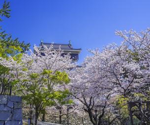 福岡県 桜 小倉城 (勝山公園)の写真素材 [FYI04508746]