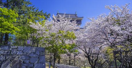福岡県 桜 小倉城 (勝山公園)の写真素材 [FYI04508754]