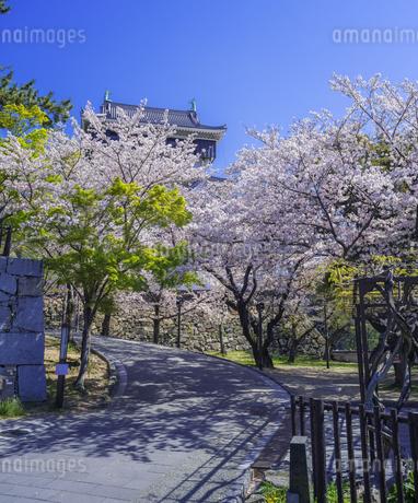 福岡県 桜 小倉城 (勝山公園)の写真素材 [FYI04508759]
