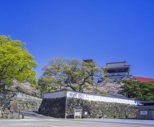 福岡県 桜 小倉城 (勝山公園)の写真素材 [FYI04508762]