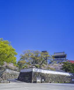福岡県 桜 小倉城 (勝山公園)の写真素材 [FYI04508764]