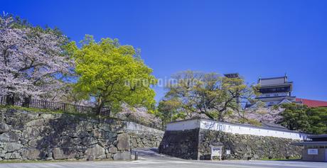 福岡県 桜 小倉城 (勝山公園)の写真素材 [FYI04508766]