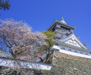 福岡県 桜 小倉城 (勝山公園)の写真素材 [FYI04508784]