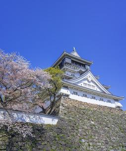 福岡県 桜 小倉城 (勝山公園)の写真素材 [FYI04508786]