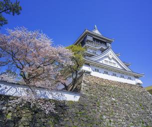 福岡県 桜 小倉城 (勝山公園)の写真素材 [FYI04508789]