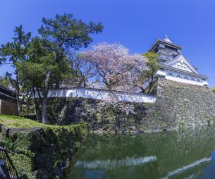 福岡県 桜 小倉城 (勝山公園)の写真素材 [FYI04508793]