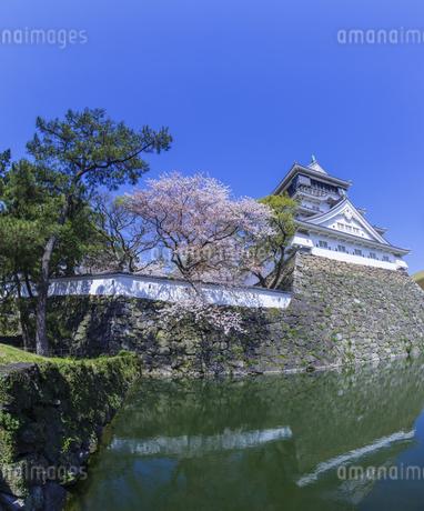 福岡県 桜 小倉城 (勝山公園)の写真素材 [FYI04508795]