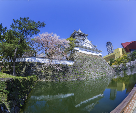 福岡県 桜 小倉城 (勝山公園)の写真素材 [FYI04508798]