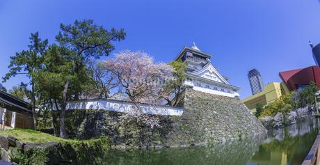 福岡県 桜 小倉城 (勝山公園)の写真素材 [FYI04508801]